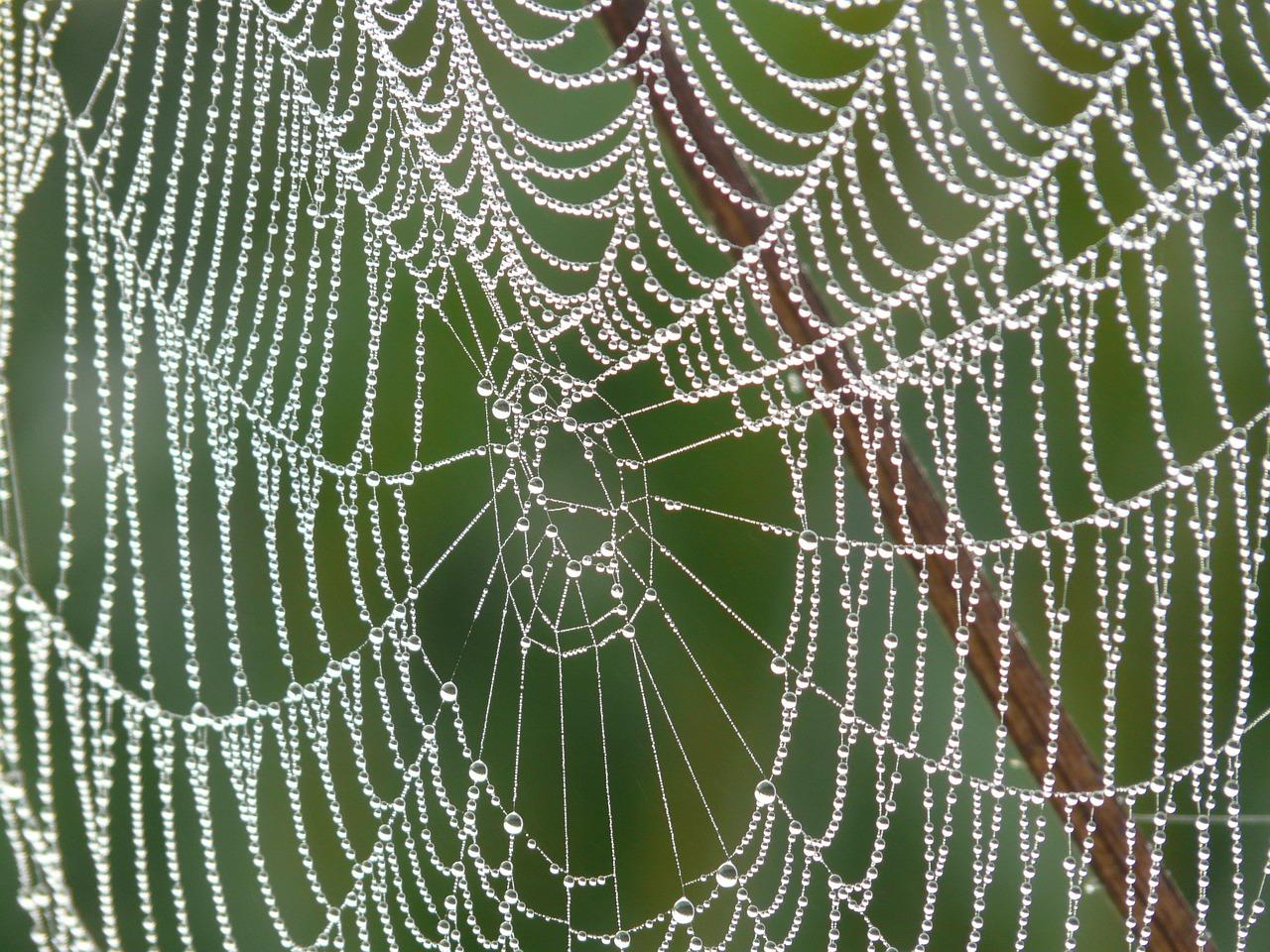 蜘蛛の巣の朝露